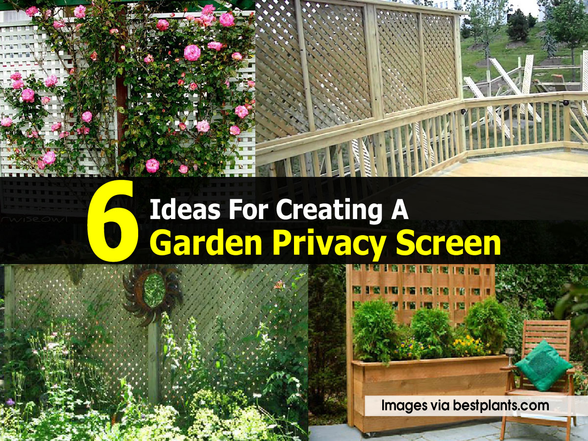 6 ideas for creating a garden privacy screen for Best garden screening for privacy